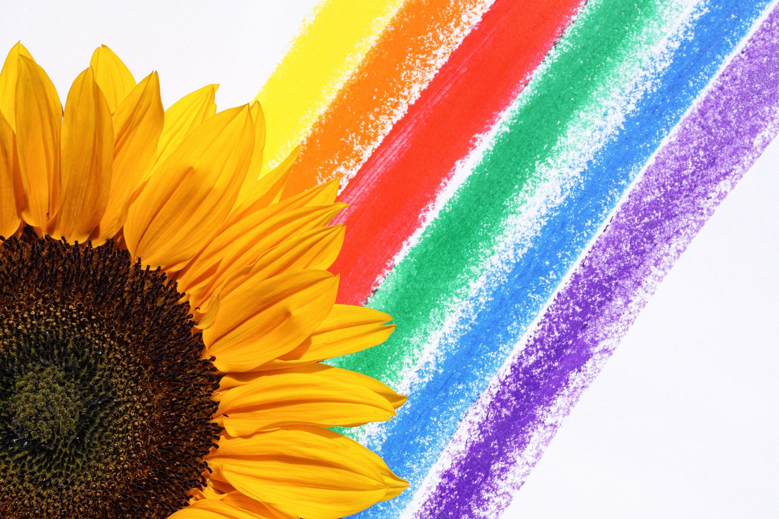 girasole davanti l'arcobaleno - storia della cooperativa sociale amico